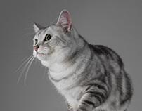 I,Pet: LATTE and BIG HEAD