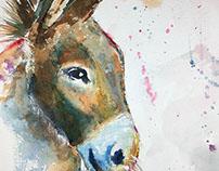 Watercolor - Donkey
