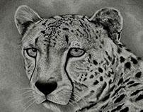 الفهد - رسم بالفحم