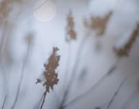 Winter | P H O T O G R A P H Y