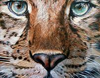 Amur leopard - 2017