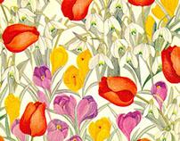 Tulipe Egypt