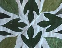 Leaf Mandalas Gr. 6 KMS