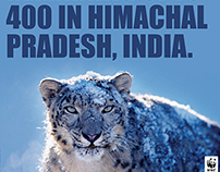 WWF - Ad Campaign