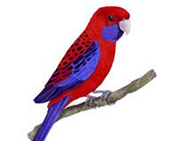 Birds - Realistic Illustrations