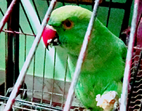Bird's possess