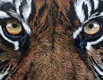 Tiger - 2016