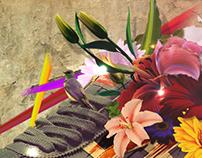 Tiger Shoes Photo Manipulation