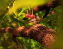 cherry tree / 2010