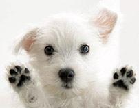 Dog Chow · Hicimos que lo increíble pasara