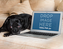 Mockup of Macbook Air Next to a Cute Dog Over a Couch