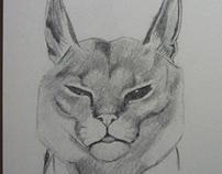 dibujos/drawings