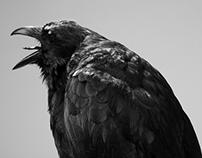 Studio birds