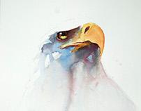 The Bald eagle portrait