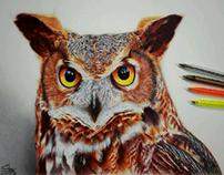 Euro Owl with ballpoint pens