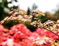 Herbstbilder 2016