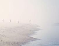 Southern Fog