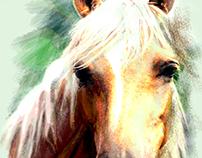 Arabian Horses 7