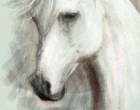 Arabian Horses 6