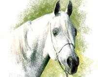 Arabian Horses 2