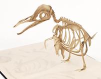 {flightless} Avian Osteology