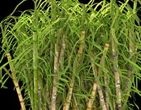 sugarcane-bundle