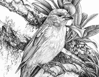 Birds - pencil drawings 2