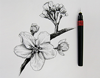 Nature illustrations