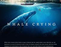 Whale Crying