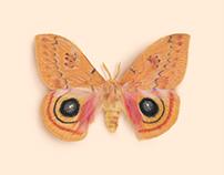 Lepidoptera Wing Pattern