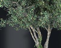 Tree 21 3D Model