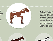 Infographic - Pelagens de cavalos (horse coat)