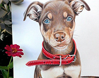 Color Pencil Drawing Dog