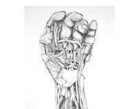 Hand Anatomy Study - Medical Illustration