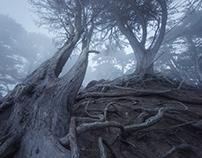 The Presidio Fog