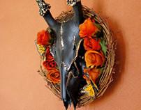 The Biologiocal Clock // Nested Deer Skull