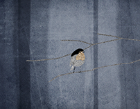 "animation ""Among Crows"""