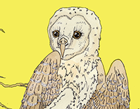 The Barn Owls Album Art