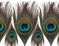 Peacock Pattern - Alessa Summer 2010