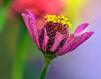 When flowers daydream