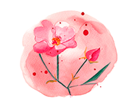 Illustrations of leadplants for Weleda North America