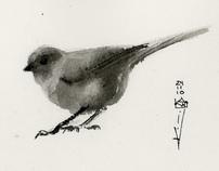 Misc birds   sketchbook and drawings
