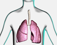 Asthma mechanisms