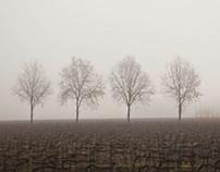 Foglands, 2013