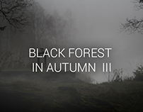 Photography - Black forest in autumn III
