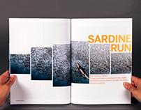 FINS   Scuba Diving Magazine