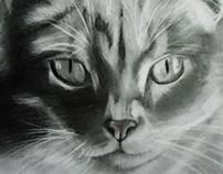 Retratos (Animales)