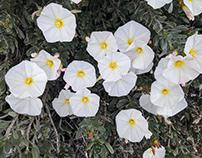 Desert Spring Plants