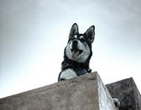 Husky Life