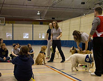 Therapy Dog Training For Success